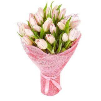 25 крупных тюльпанов