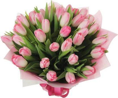 35 тюльпанов крупных