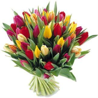 50 тюльпанов микс