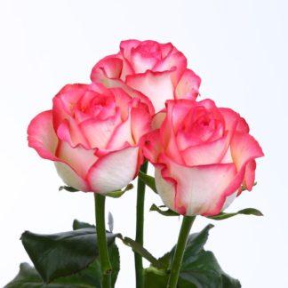 3 розовые розы